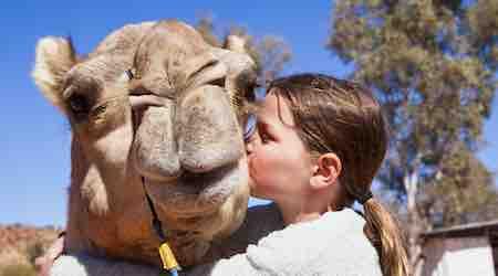 Pyndan Camel Rides